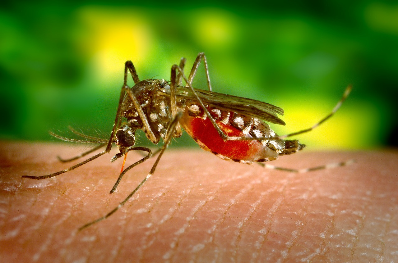 You are currently viewing Mosquito-borne diseases has threaten World